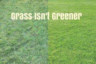 The Grass Isn't Greener