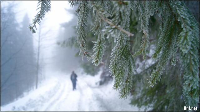 mùa đông về lạnh lẽo