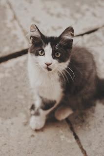 人工智慧貓砂盆,幫你監控愛貓的健康!(上)