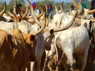 Three African superpowers of beef production are Botswana, Namibia, and Zimbabwe.