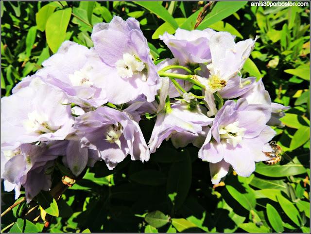 Dallas Arboretum & Botanical Garden: Avispa