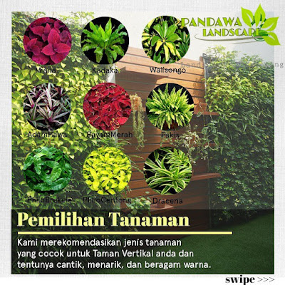 Jenis - jenis tanaman vertical