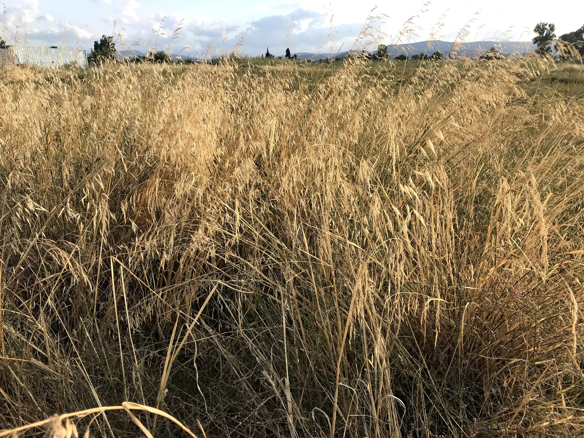 χωράφι