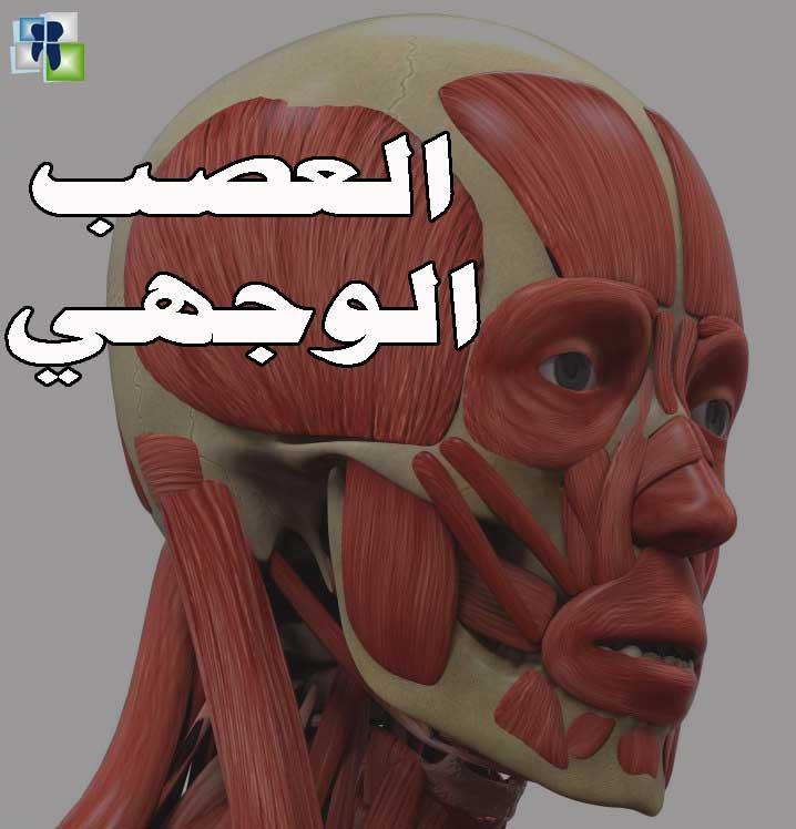 العصب الوجهي - سلسلة الأعصاب في طب الأسنان