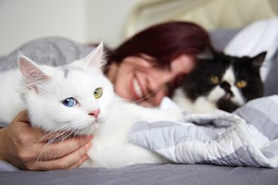 22 beneficios comprobados de tener un gato para la salud física y mental