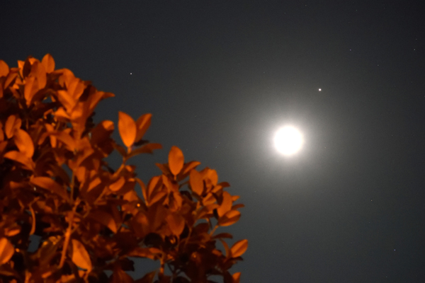 Another photo I took of the Moon, Saturn and Jupiter in the night sky...on August 28, 2020.