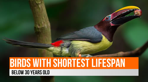 LIST: Birds with shortest lifespan (below 30 years old)