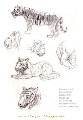 sketchbook drawings of tigers