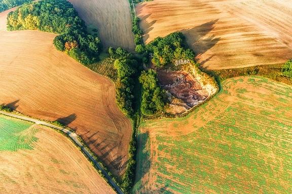 Pour enrayer la perte de biodiversité, le verdissement doit-il aller plus loin ?