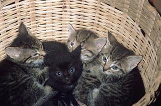anak kucing mulai tumbuh