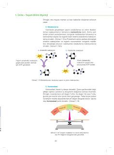 9. Sınıf Biyoloji Ders Kitabı Cevapları Netbil Yayınları Sayfa 20