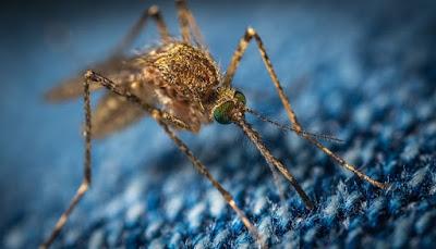 mengusir nyamuk di musim panans