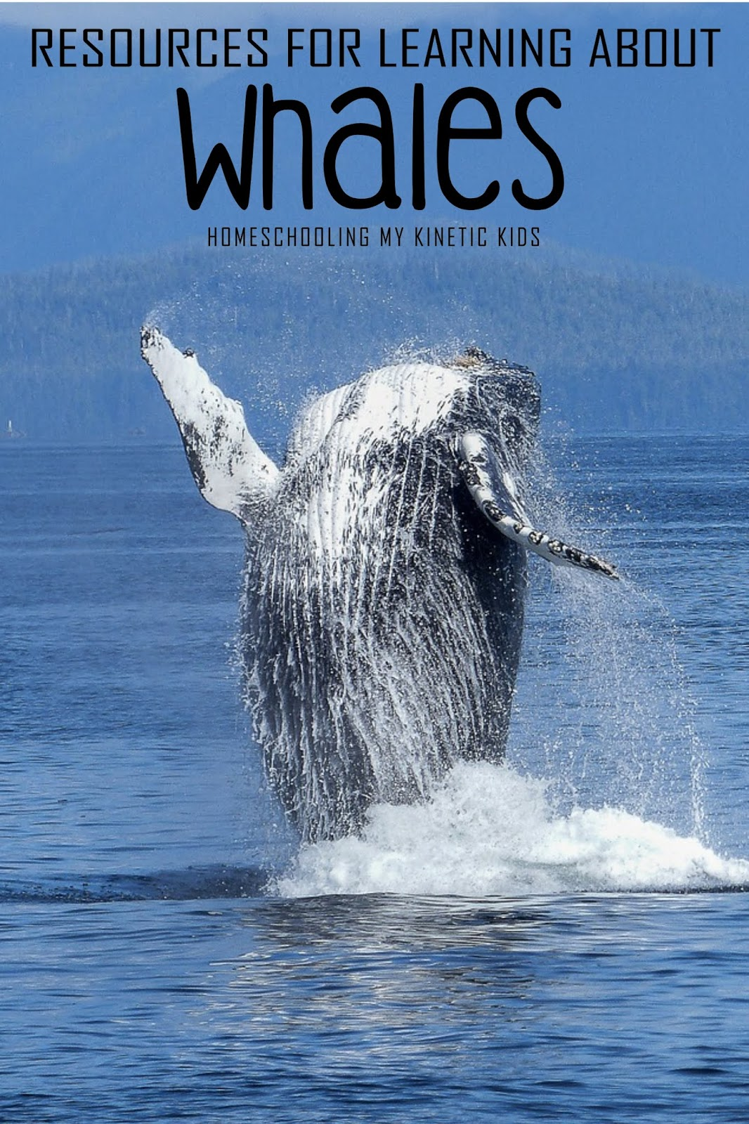 Resources For Learning About Whales