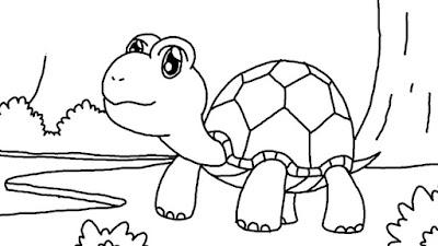 gambar sketsa kura-kura lucu