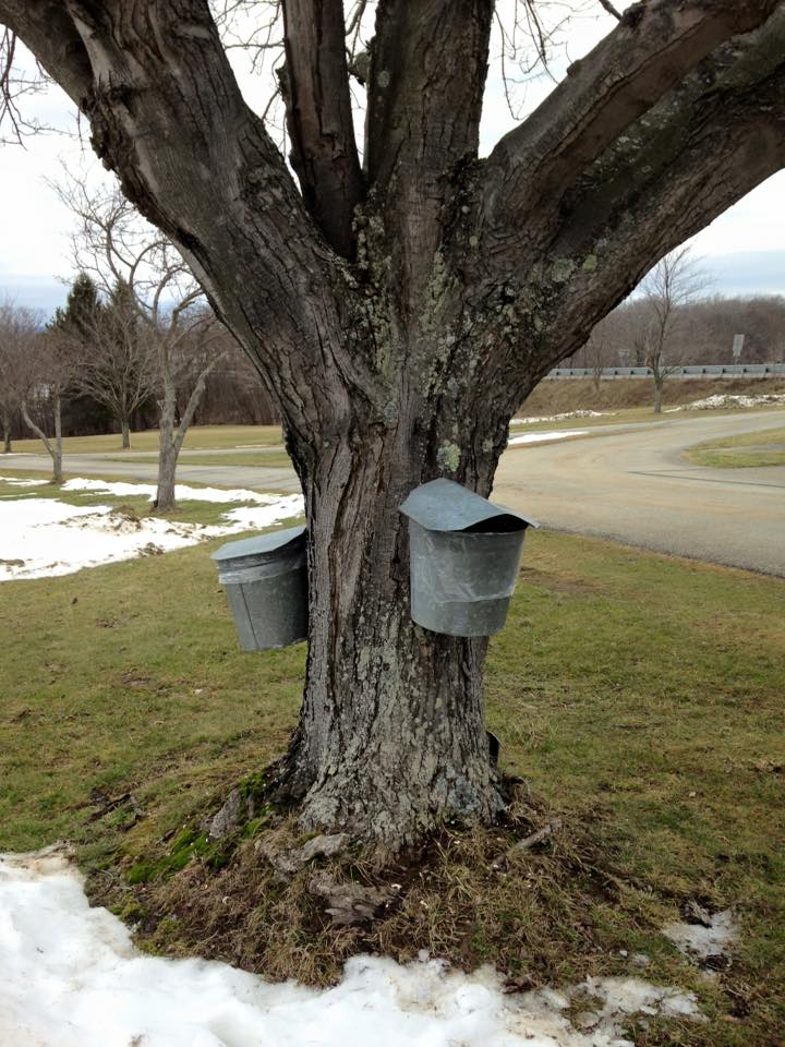 Somerset County Maple Tour