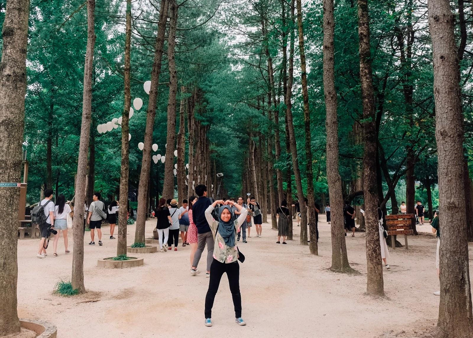 Nami Island Seoul Korea Curitan Aqalili