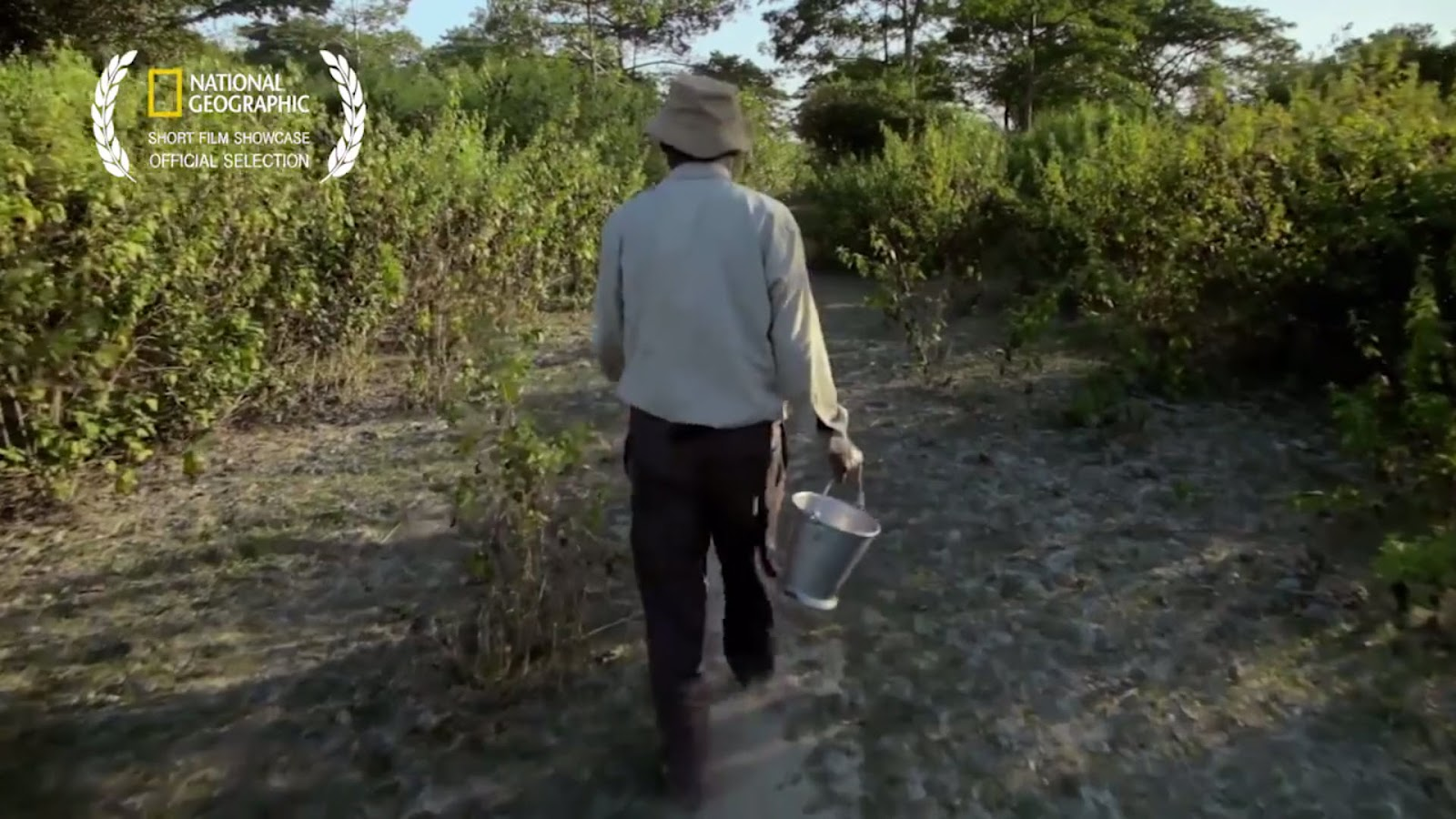 This Guy Has Been Planting Trees Each Day For 37 Years. The Result Is Mind-Blowing!