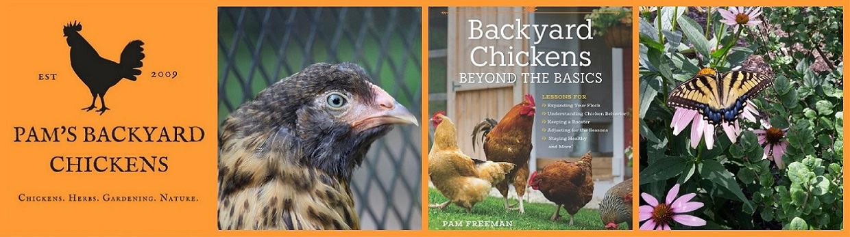 Pam's Backyard Chickens