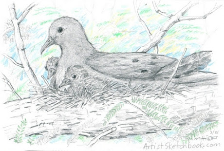 A mother Mourning Dove and her two nestlings