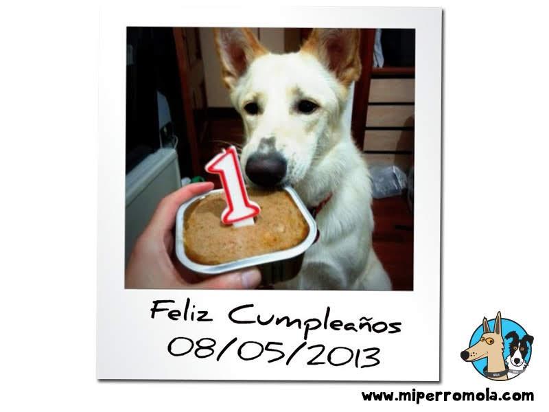 Can de Palleiro celebrando su cumpleaños