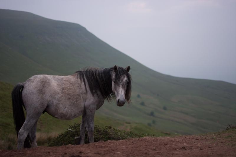hay bluff wild horse landscape