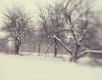 https://www.etsy.com/listing/125591875/winter-landscape-photo-snow-photograph?ref=favs_view_2