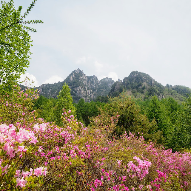 瑞牆山 みずがき山自然公園 ツツジ