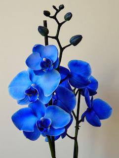 arti bunga berwarna biru