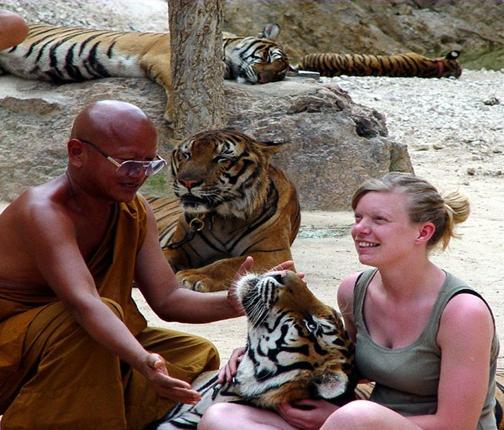 Les tigres 14-02-2031004
