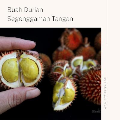 Hanif Wicaksono Pelindung Buah Langka Kalimantan