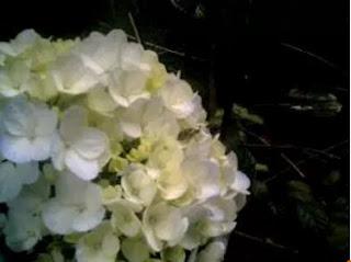 Bunga Pancawarna