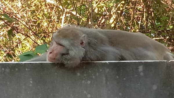 夏日炎炎人猴同採果 彰化榮家防疫生活樂趣多