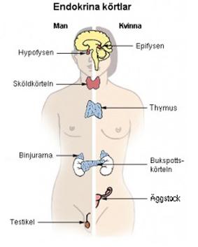 problem med sköldkörteln ärftligt
