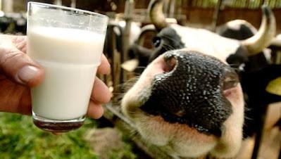 susu belum pasteur makanan untuk ibu mengandung