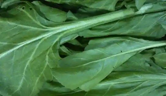 Preparation of 'growing' artificial meat in spinach leaves