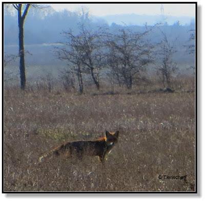 der Fuchs hat uns gesehen