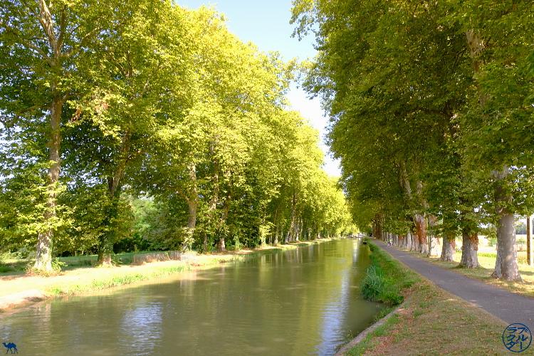Le Chameau Bleu - Blog Voyage à Vélo sur le Canal des deux Mers - Paysage du Tarn Et  Garonne