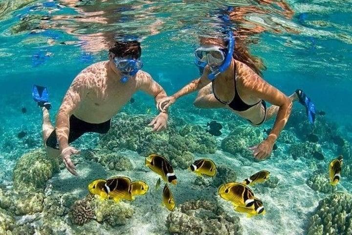 Lặn ngắm san hô trong tour ghép Cù Lao Chàm