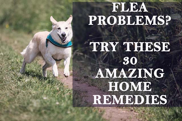 Get rid of fleas naturally: 30 incredible ways