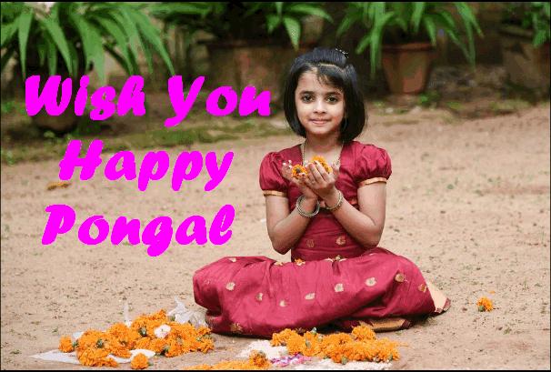 Pongal Festival 2017
