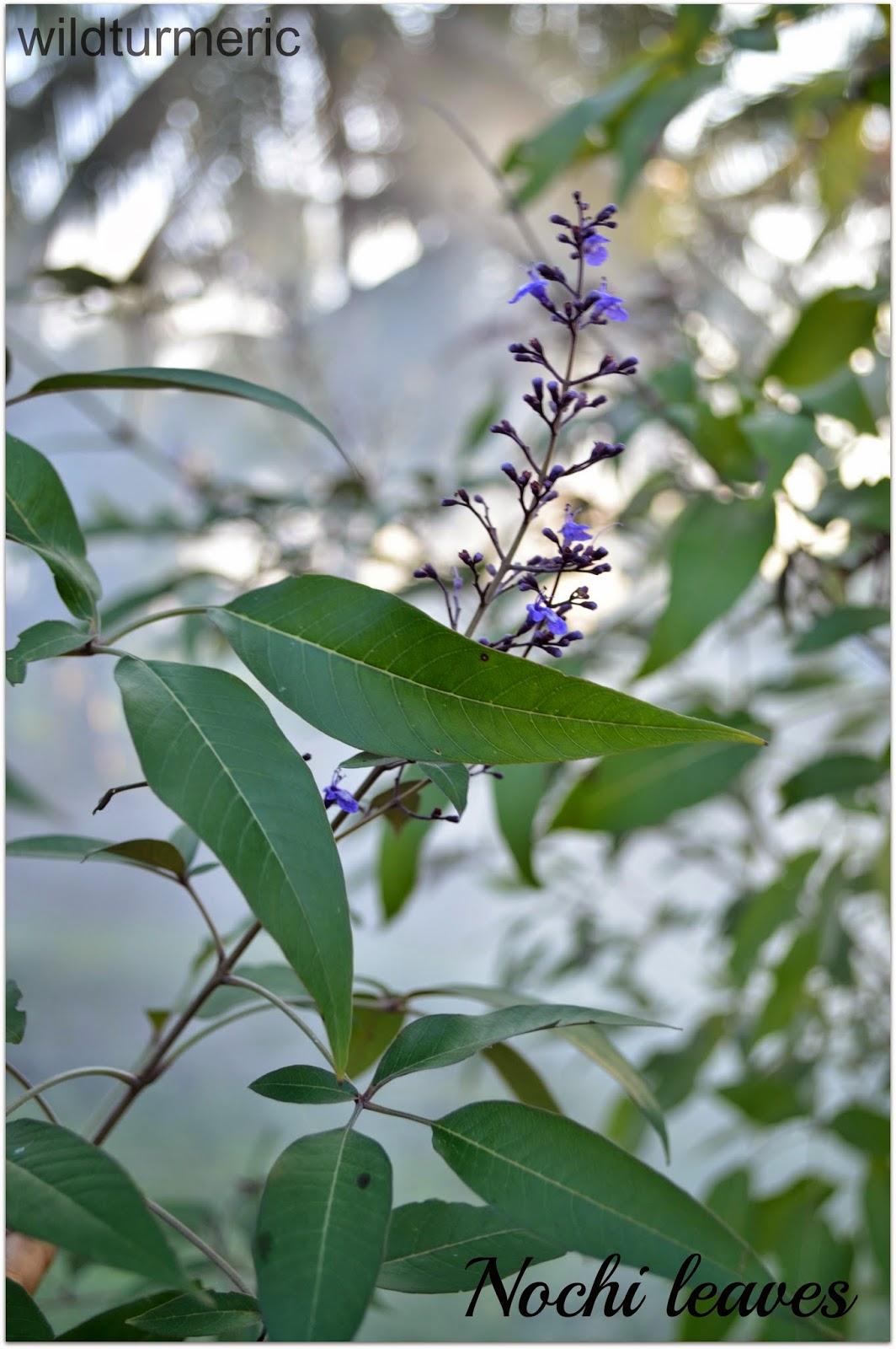 Turmeric Powder - Health Benefits, Uses & Side Effects