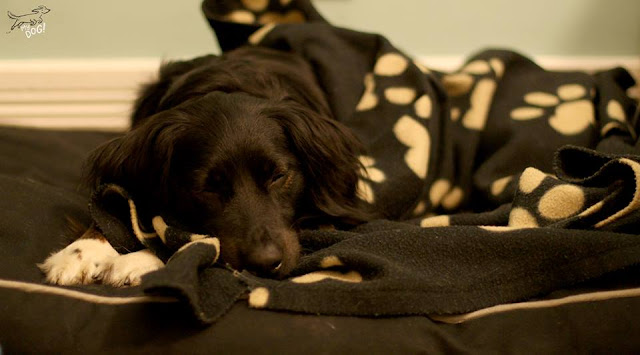 obrigado por tratar bem do seu cão, brincadeiras caninas, bola, coleira, blogue de casal, Ela e Ele, Ele e Ela, My Dog, Portugal, cão, patudo, sessão fotográfica, giveaway, pet, sorteio