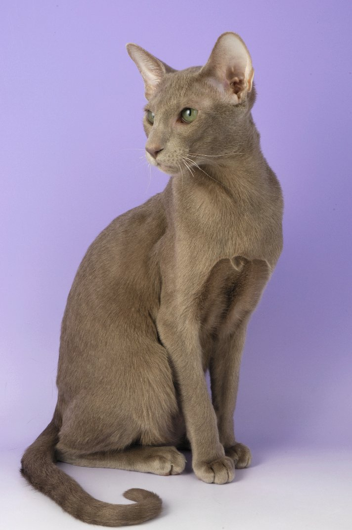 Straight from the Horse's mouth: National Pet Month - Cat ...