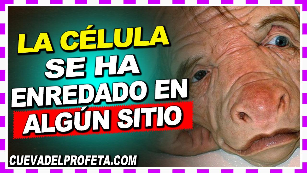 La célula se ha enredado en algún sitio - William Branham en Español