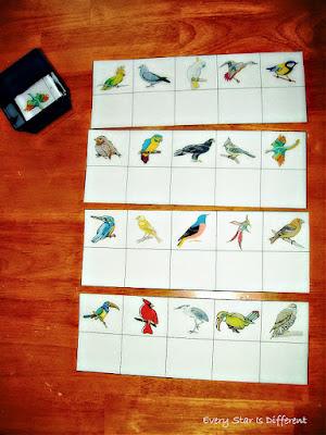 Bird Match Up