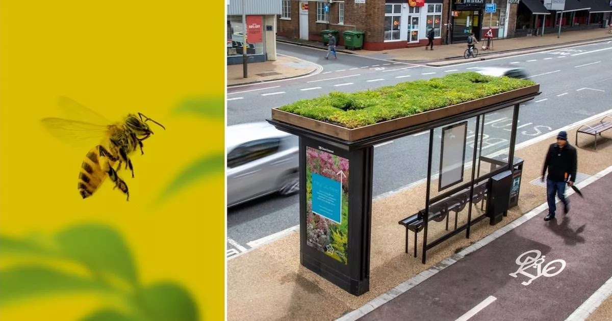 Leicester Is Turning All of Its Bus Stops Into Green Roof Pollinator Gardens for Bees