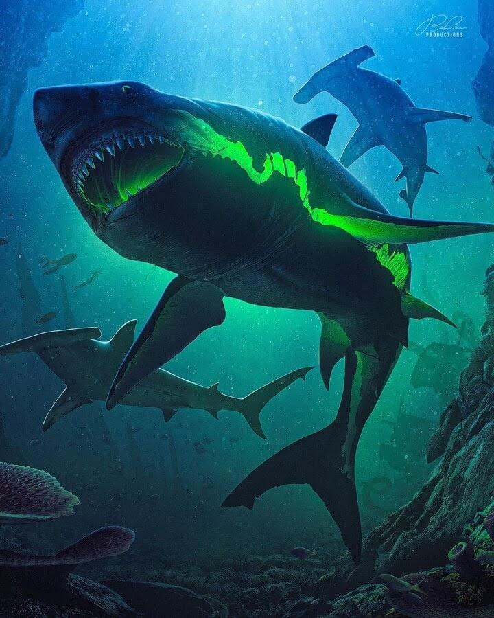 07-Fluorescent-Shark-Benny-Productions-www-designstack-co