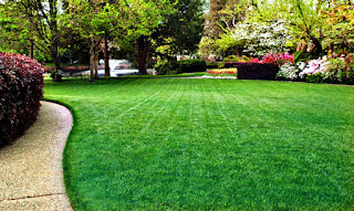 Tips On How to Keep Your Grass Green