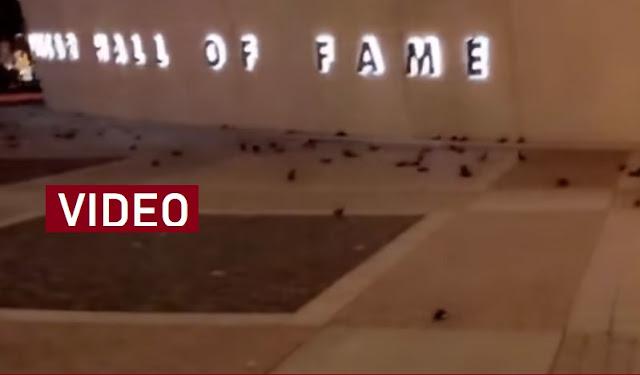 Escenas apocalíptico: cientos de aves se suicidan contra un edificio en EEUU