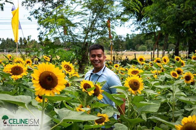 mang ileol sunflower farm